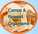 Campy & Related Organisms